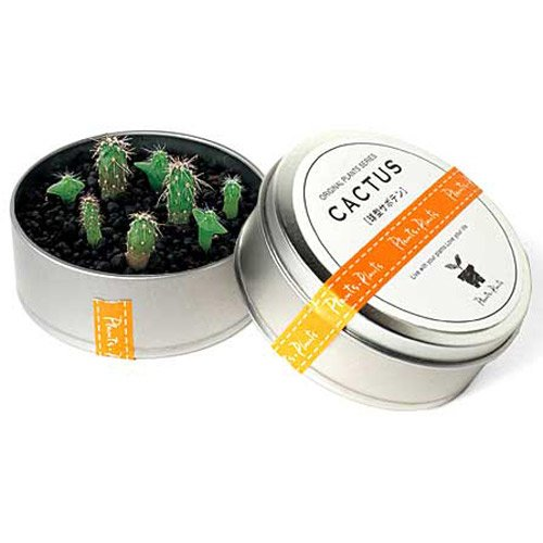 plants-in-cans-cactus