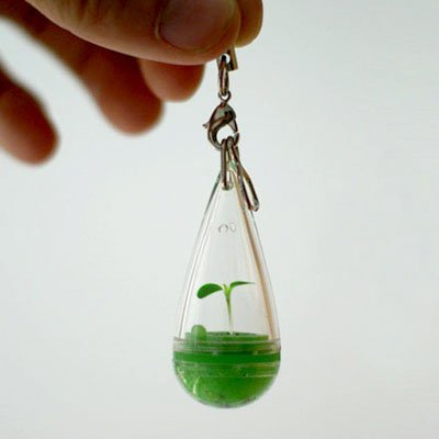plant-in-the-glass